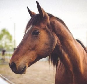 horse example for how we file memories